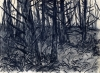 Forest_View_from_Firelane_15