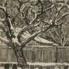 Walnut-Tree-in-Snow